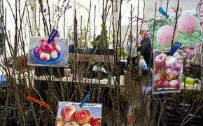 В Перми начали работу ярмарки для дачников