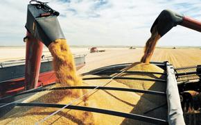 В Литве некоторые политики требуют запретить импорт российской пшеницы