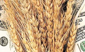 Несмотря на рекордный урожай, в России выросли цены на зерно