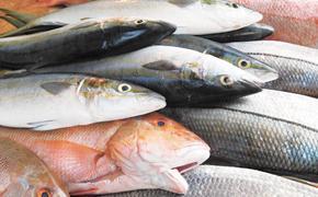 У рыбаков новый рекорд