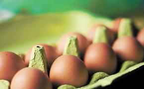 Российский экспорт: хлеб – в Бразилию, яйца – в Гвинею