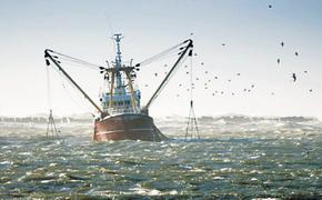 В ближайшие годы произойдет рост добычи морских рыб Каспия