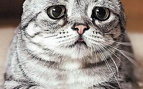 В США считают, что коты ответственны за глобальное потепление
