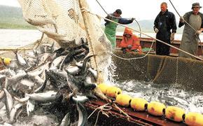 Экспорт российской рыбы рухнул на 35%